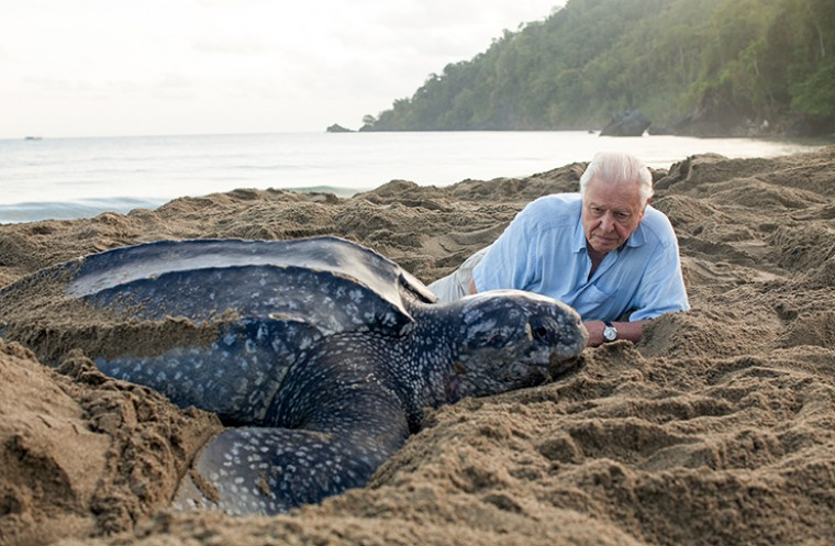 Blue Planet II presenter David Attenborough with a turtle