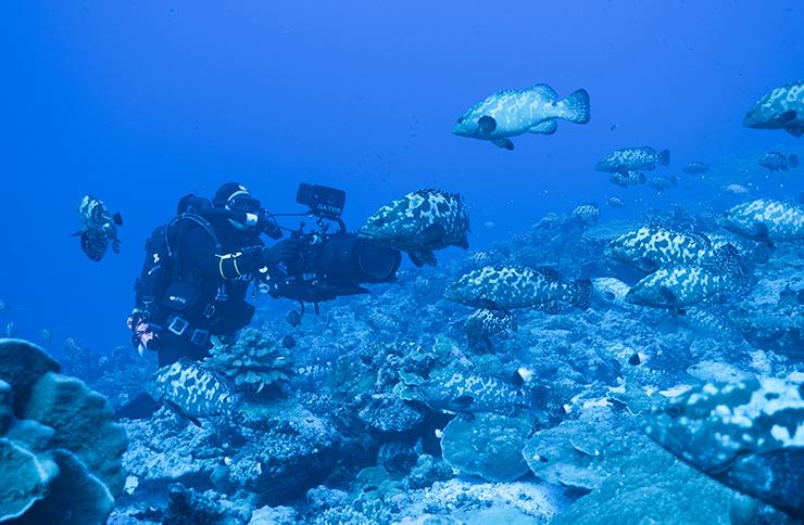 Blue Planet II cameraman films sealife