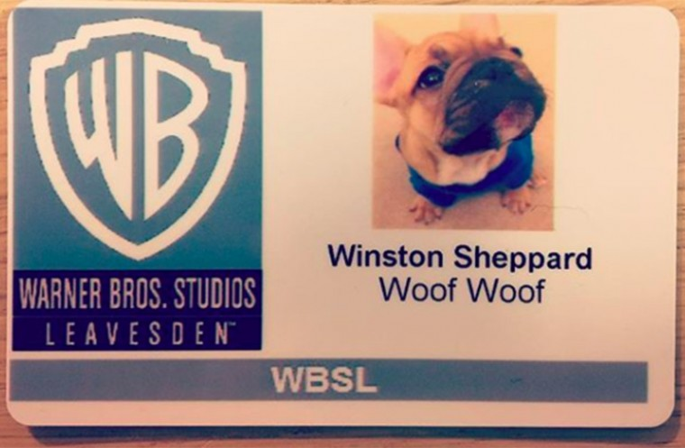 Winston the mascot dog of Warner Brothers