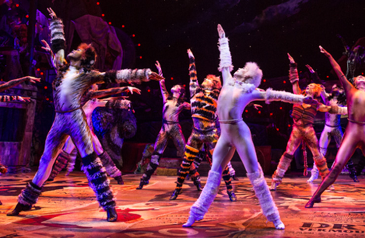 cats broadway musical dog theatre news