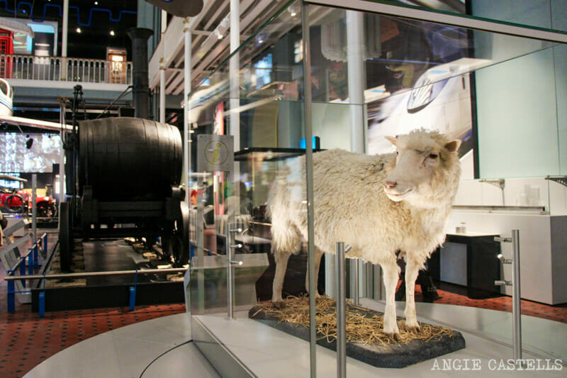 Visitar el Museo Nacional de Escocia, en Edimburgo - La oveja Dolly