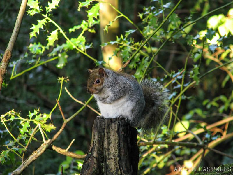 Que-visitar-Dunfermline-Excursion-desde-Edimburgo