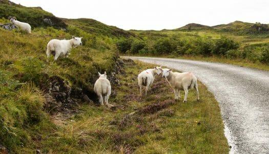10 cosas que pasan cuando viajas por Escocia