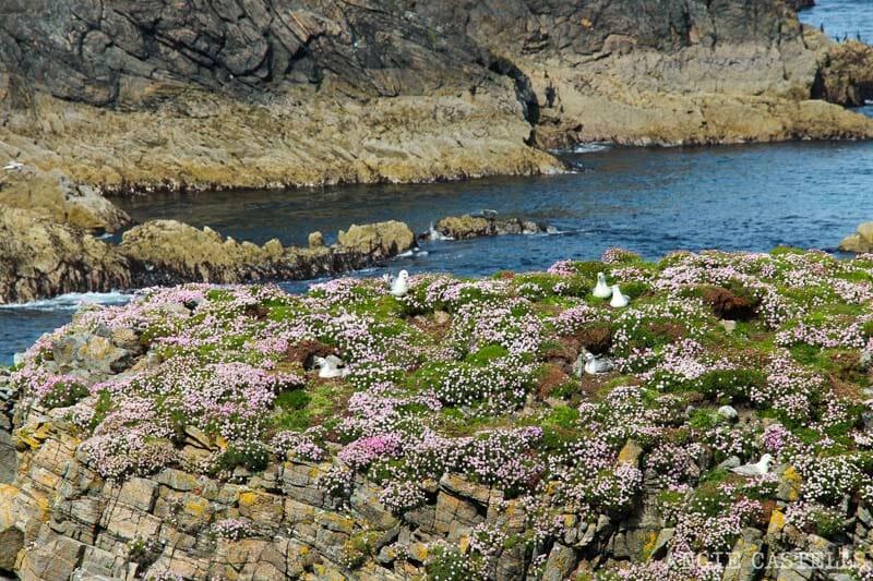 Razones para visitar la isla de Lewis y Harris - Aves en Butt of Lewis