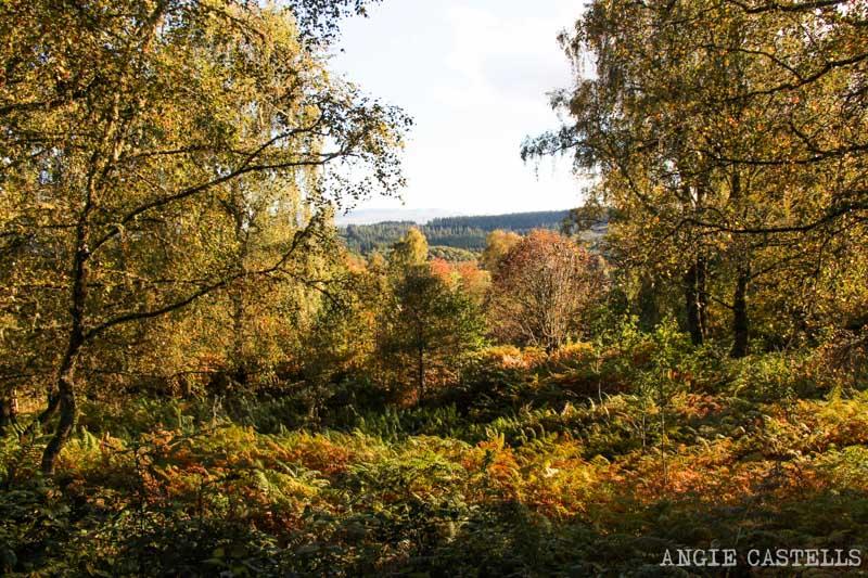 Ruta por el Loch Lomond y los Trossachs en 2 días - Duke's Pass