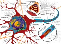 Trastornos neuromusculares
