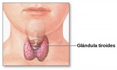 Cirugía de tiroides