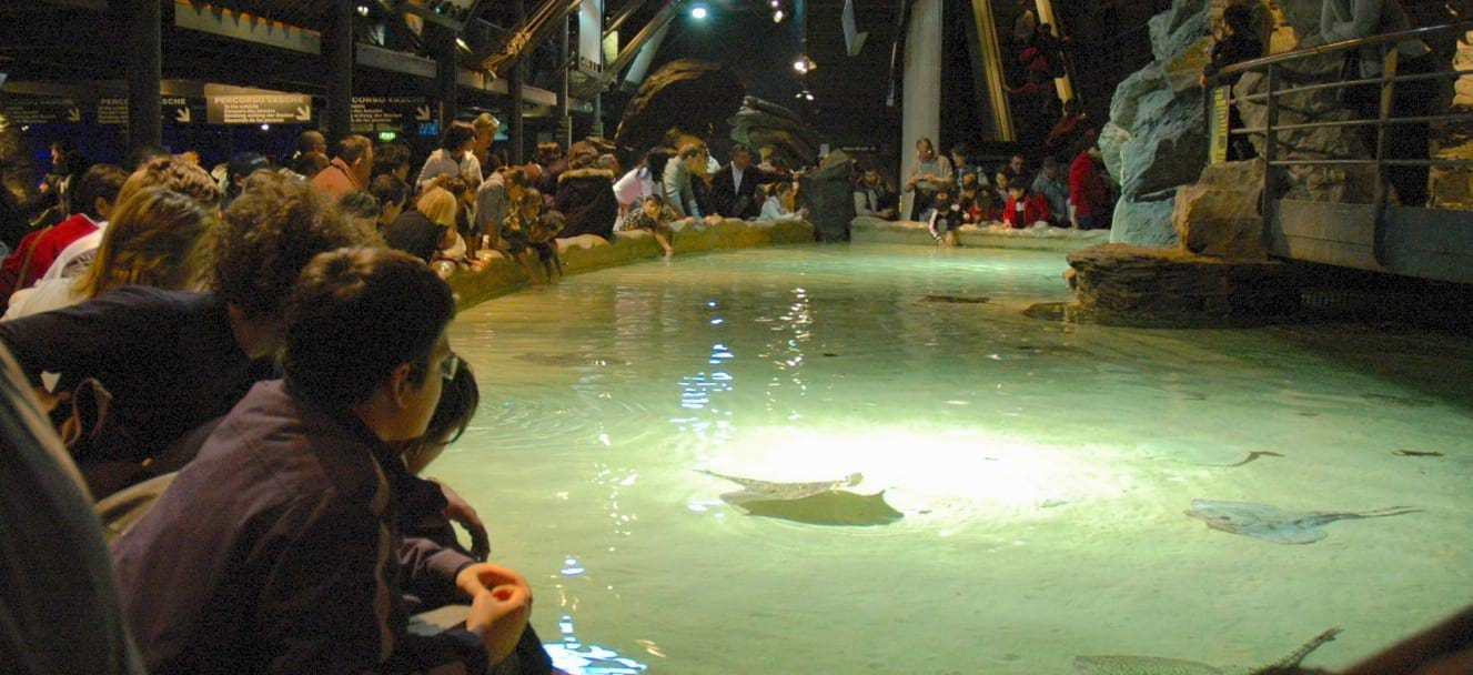 When to visit the aquarium of genoa tips to beat the queues for Acquario shop online