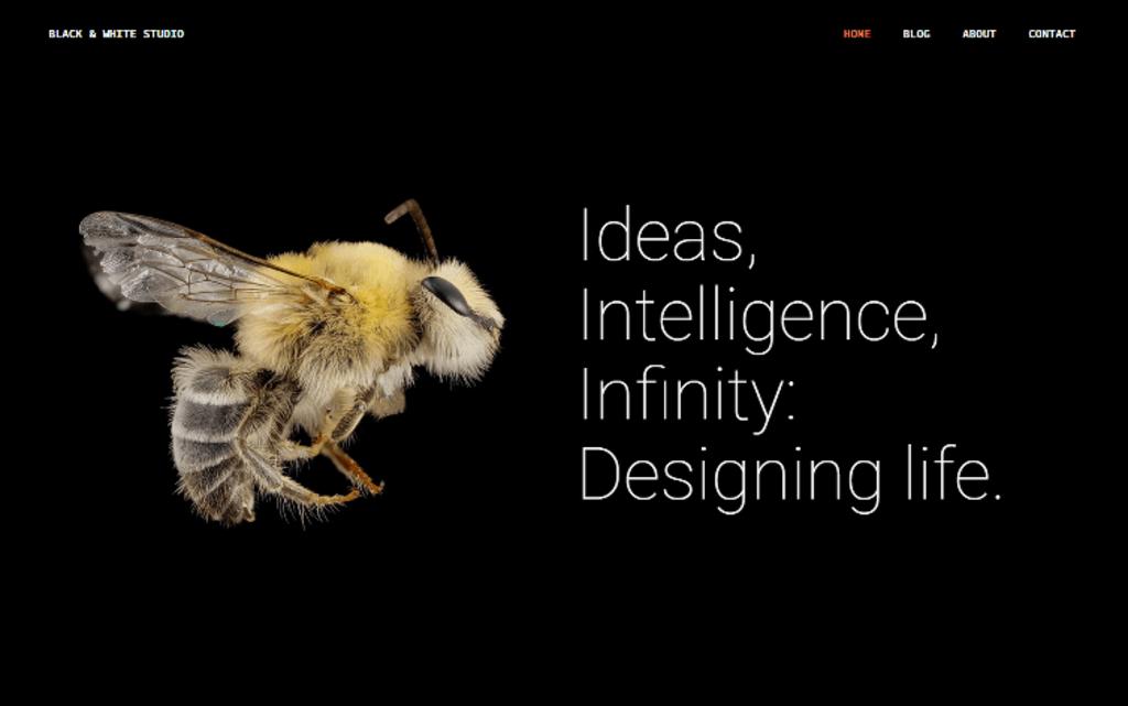 Colors creative portfolio – Thème WordPress-1