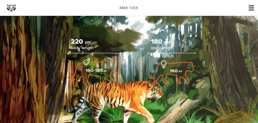 Exemple vidéo site Internet - Amur Tiger