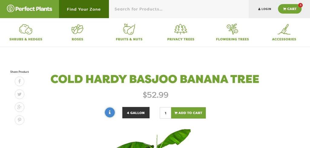 Cold Hardy Basjoo Banana Tree - Perfect Plants