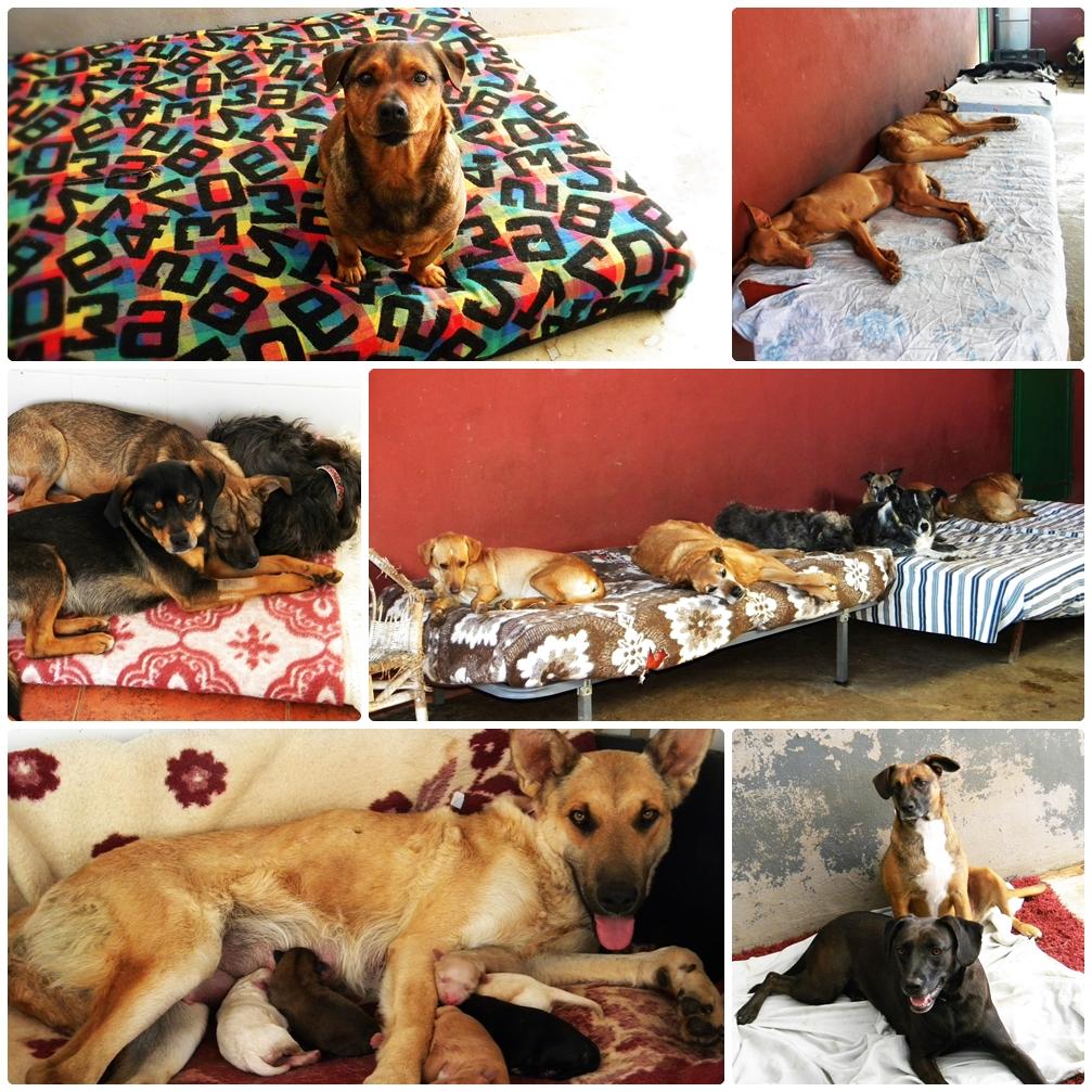 Ayúdanos a que no nos falte una cama caliente