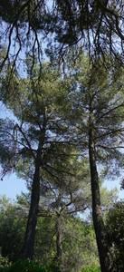 Hauts arbres sur fond de ciel bleu