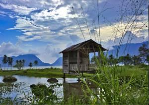 Cabane sur pilotis au milieu d'une rizière inondée