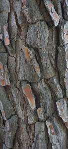Gros plan sur l'écorce d'un arbre