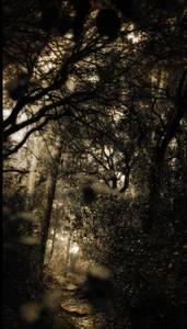 Forêt traversée de lumière