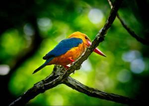 Oiseau coloré sur une branche
