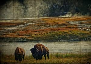 Bisons dans une prairie aux couleurs automnales