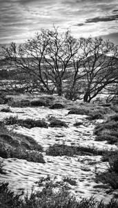 Arbuste dans un pré enneigé
