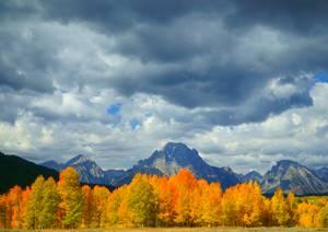 Forêt colorée sur fond de montagne