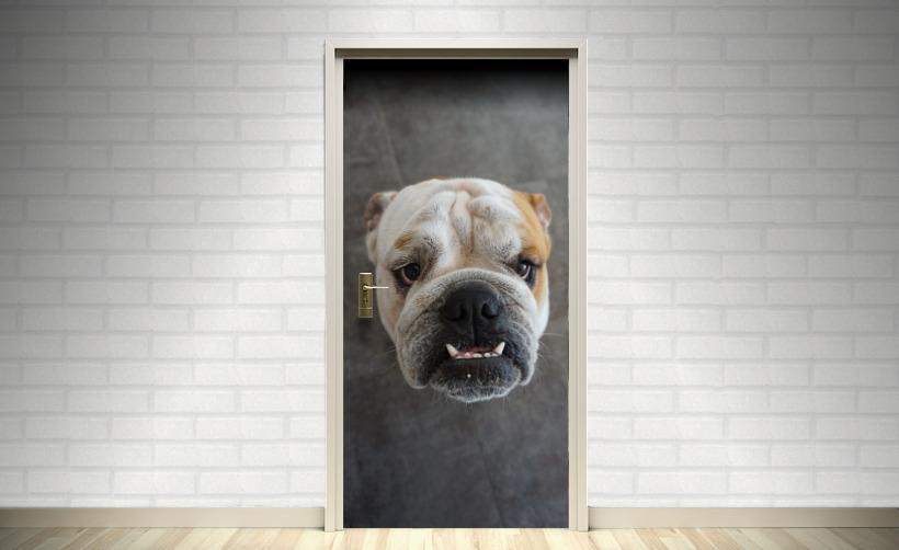 Adhésif pour porte : adhésif thème chien