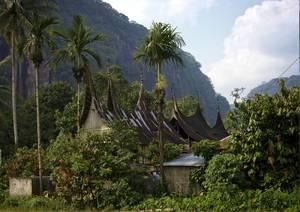 Maison au coeur d'un forêt tropicale
