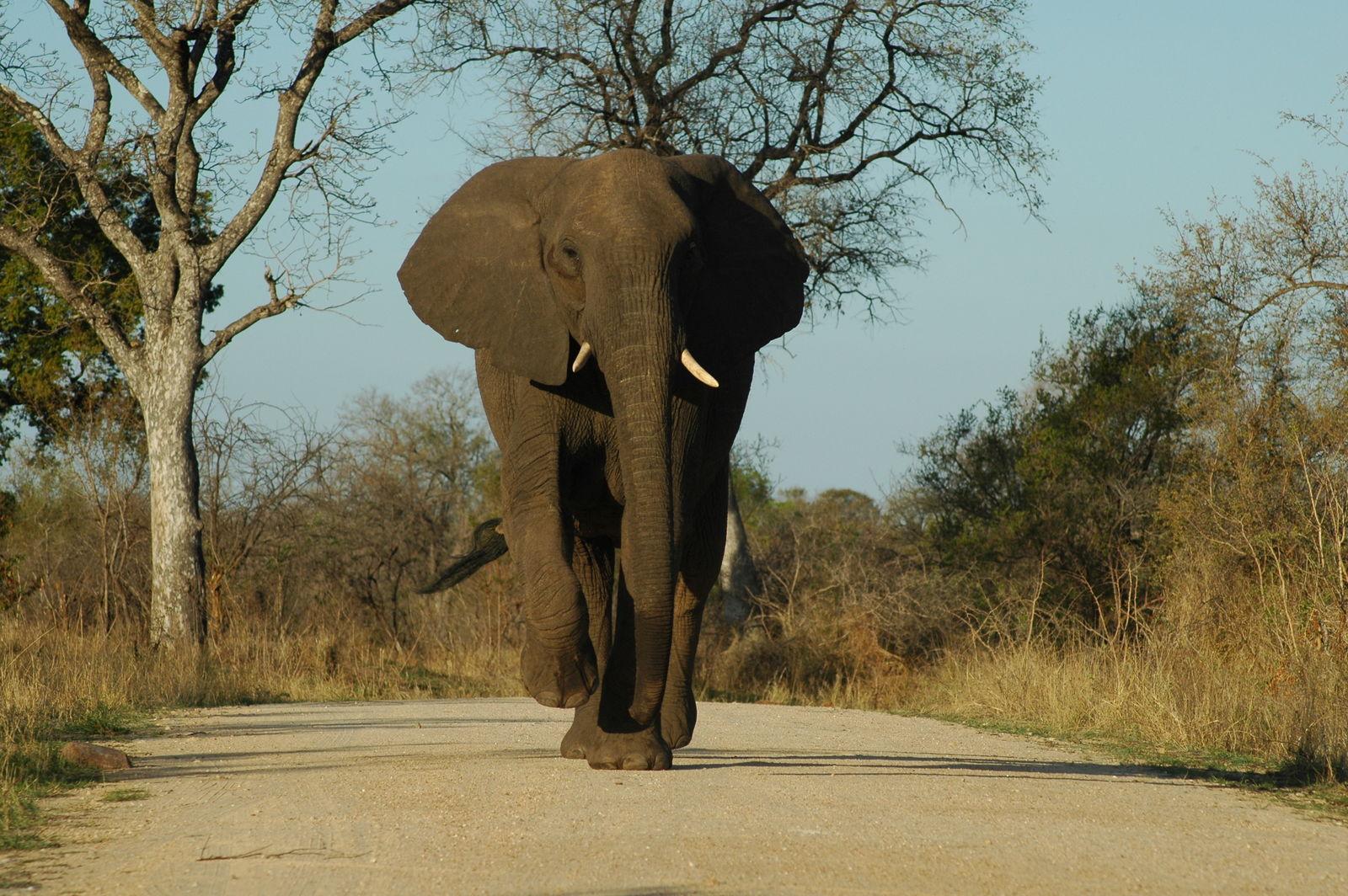Timbavati Private Game Reserve: op zoek naar Big Five| AmbianceTravel