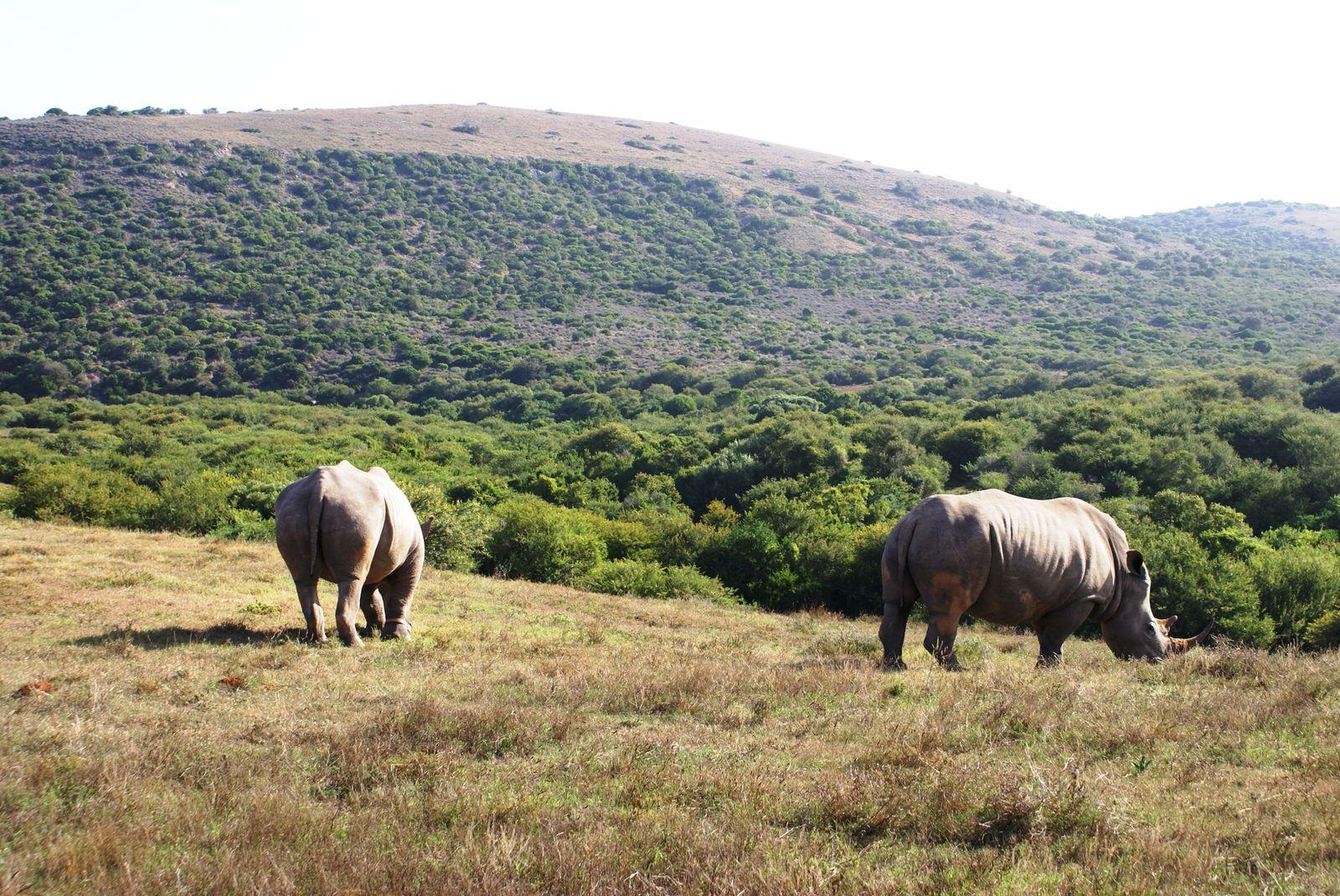 Tips voor rondreis Zuid-Afrika met kinderen   AmbianceTravel