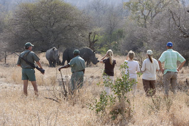 rondreis zuid-afrika wandelsafari Plains Camp Walking safaris neushoorns