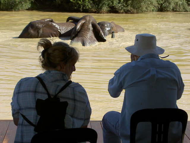rondreis zuid-afrika addo Elephant Park olifanten in water