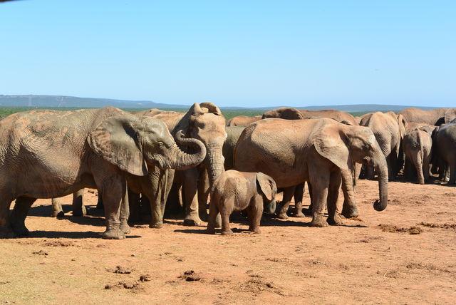 Rondreis Zuid-Afrika Addo Elephant Park