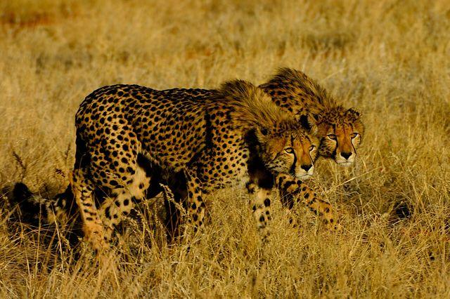 Individuele rondreizen Zuid-Afrika | AmbianceTravel