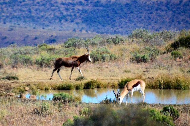Rondreis Zuid-Afrika Mount Zebra National Park