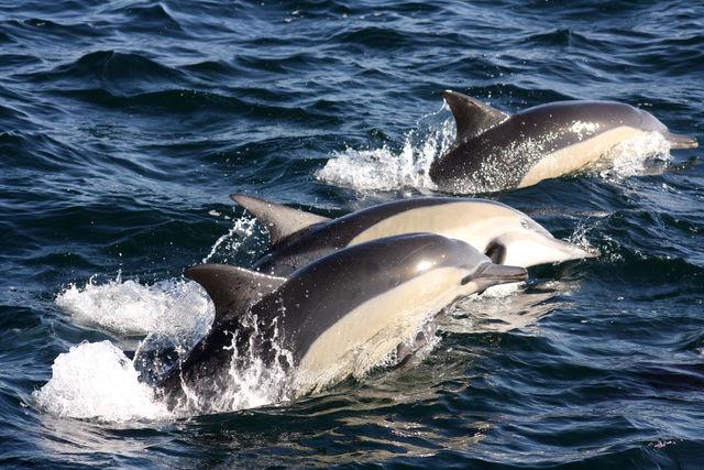 rondreis zuid-afrika Hermanus dolfijnen