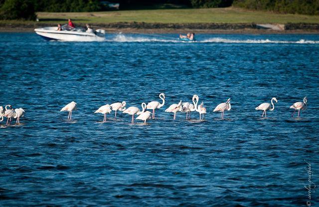 rondreis zuid-afrika Francis Bay pelikanen