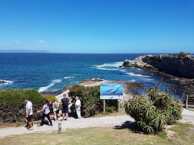 Rondreis Zuid-Afrika Hermanus cliff path wandelen