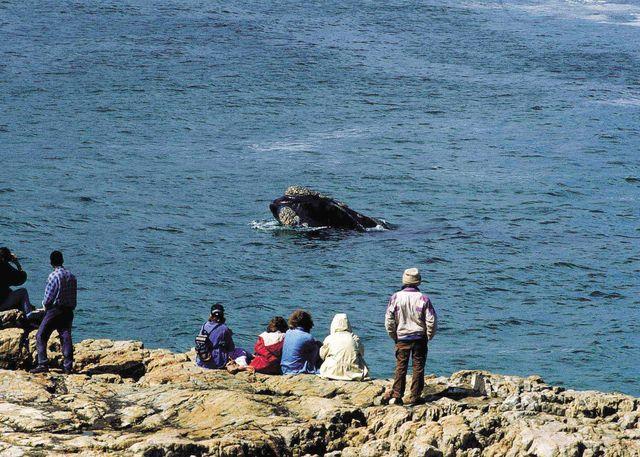 Rondreis Zuid-Afrika Hermanus walvis spotten