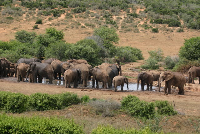 Rondreis Zuid-Afrika Addo olifanten Cosmos cuisine