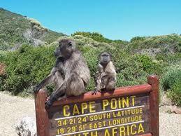 Rondreis Zuid-Afrika Cape Point bavianen
