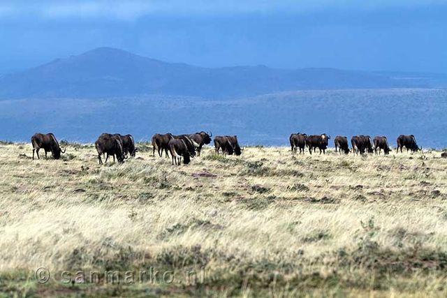 Rondreis Zuid-Afrika Karoo landschap Wildebeesten