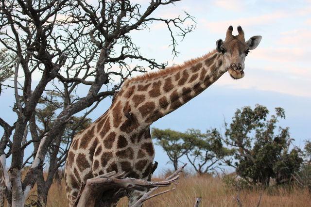 Wildlife, wetlands & beach in het oosten van Zuid-Afrika   AmbianceTravel