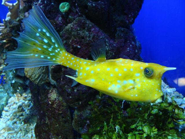 Montrove Aquarium Galicië Spanje