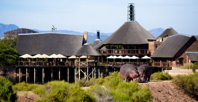 Individuele rondreis Zuid-Afrika - Kaapstad - Wijn, natuur en safari