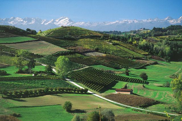 Rondreis Italië Piemonte Monferrato wijngaarden
