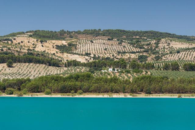 Rondreis Spanje Andalusië Zuheros olijven plantage