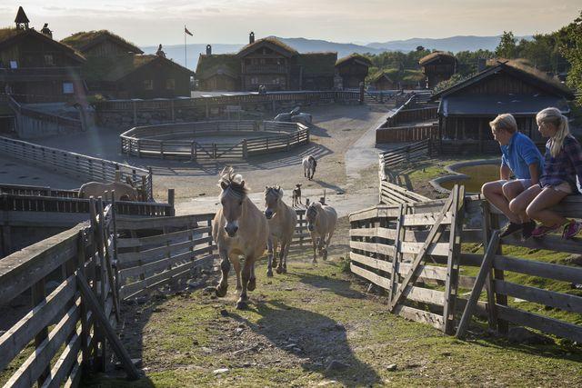 Paarden Geilo Noorwegen