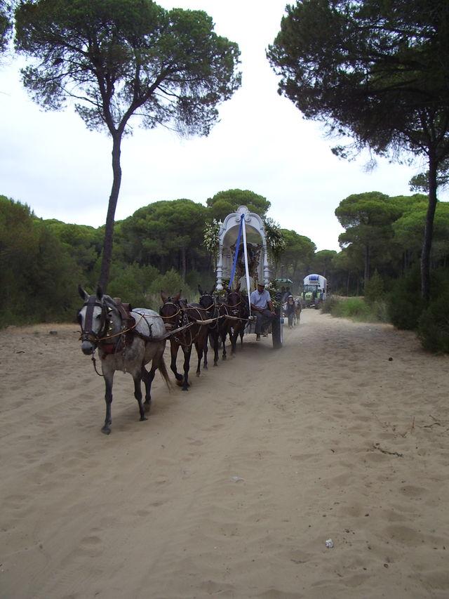 Park Parque Nacional de Donana Andalusië