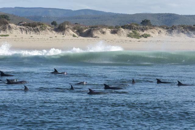 Rondreis Zuid-Afrika Plettenberg dolfijnen