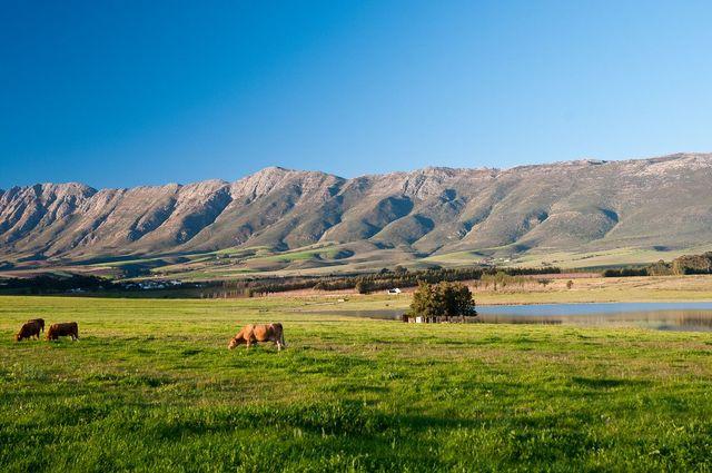 rondreis zuid-afrika Tulbagh vallei