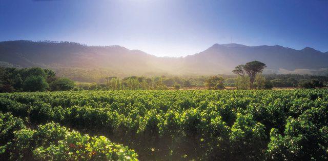 Rondreis Zuid-Afrika wijnland Constantia Steenberg